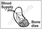 blood supply scaphoid