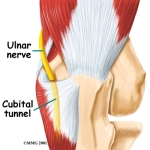 elbow_cubtun_anatomy01